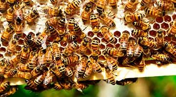 Parrainage de ruche en France