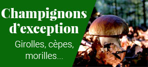Champignons : cèpes, morilles, girolles