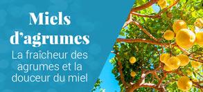 Miel d'agrumes : oranger et citronnier