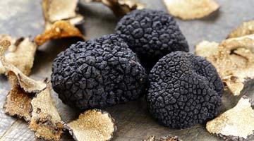 Truffe noire fraîche de Lozère