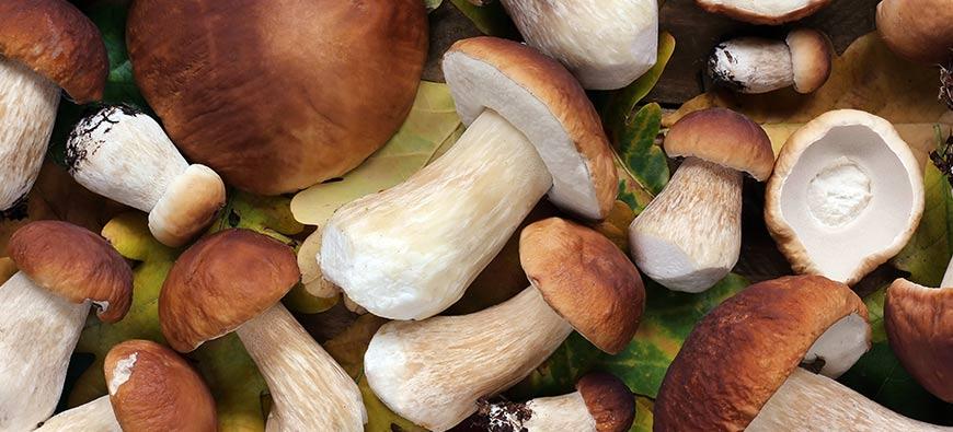 Cèpes et champignons
