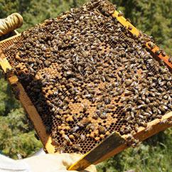 Fabrication du miel